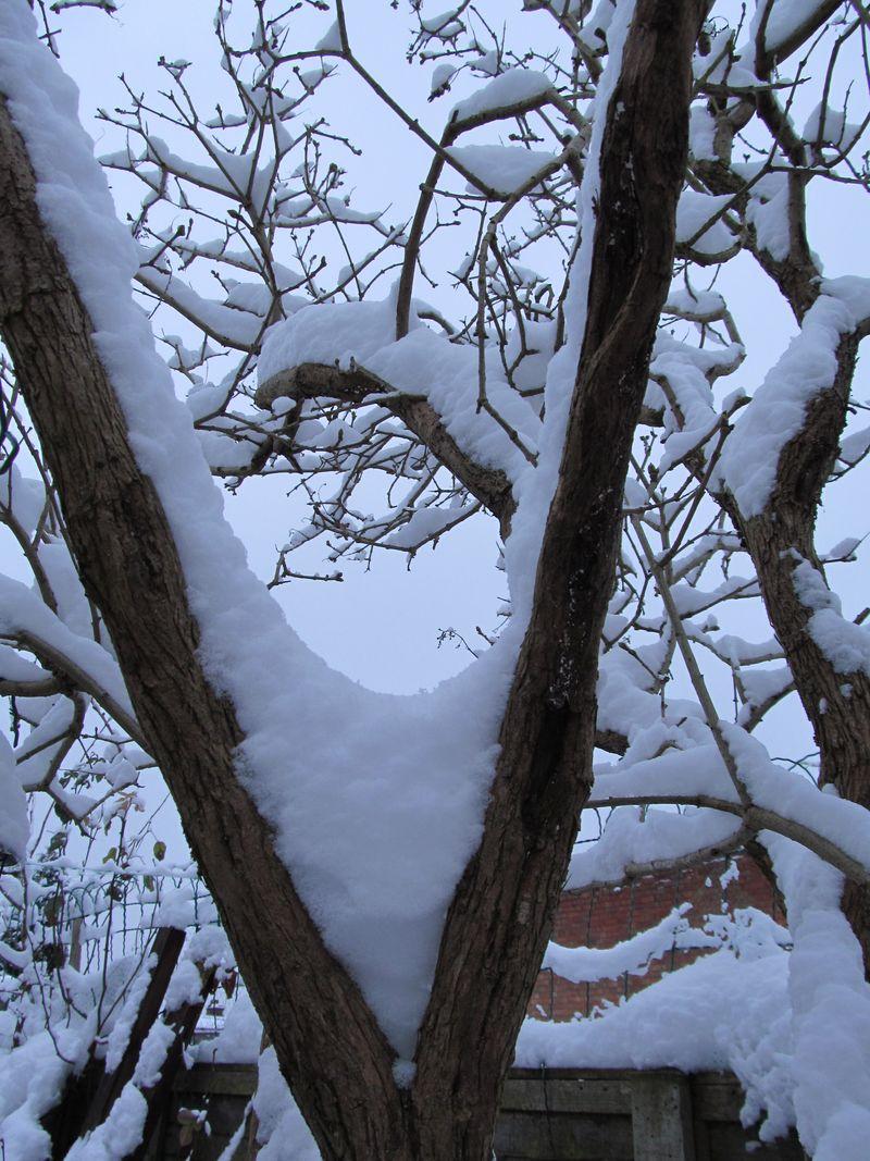 Snowy weekend jan 2013 023
