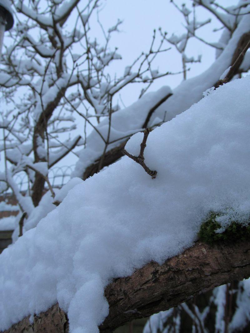 Snowy weekend jan 2013 022
