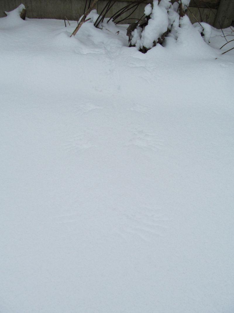 Snowy weekend jan 2013 025