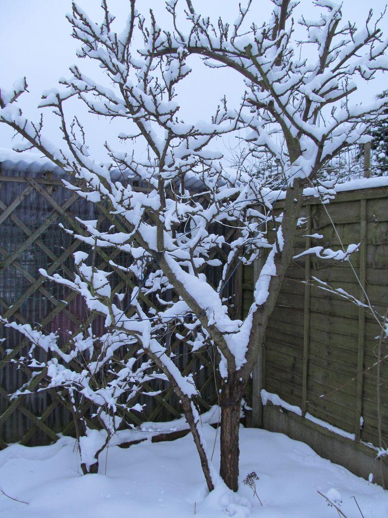 Snowy weekend jan 2013 017