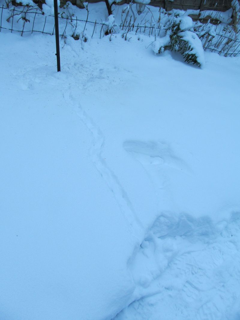 Snowy weekend jan 2013 014
