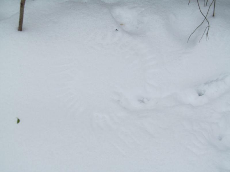 Snowy weekend jan 2013 026